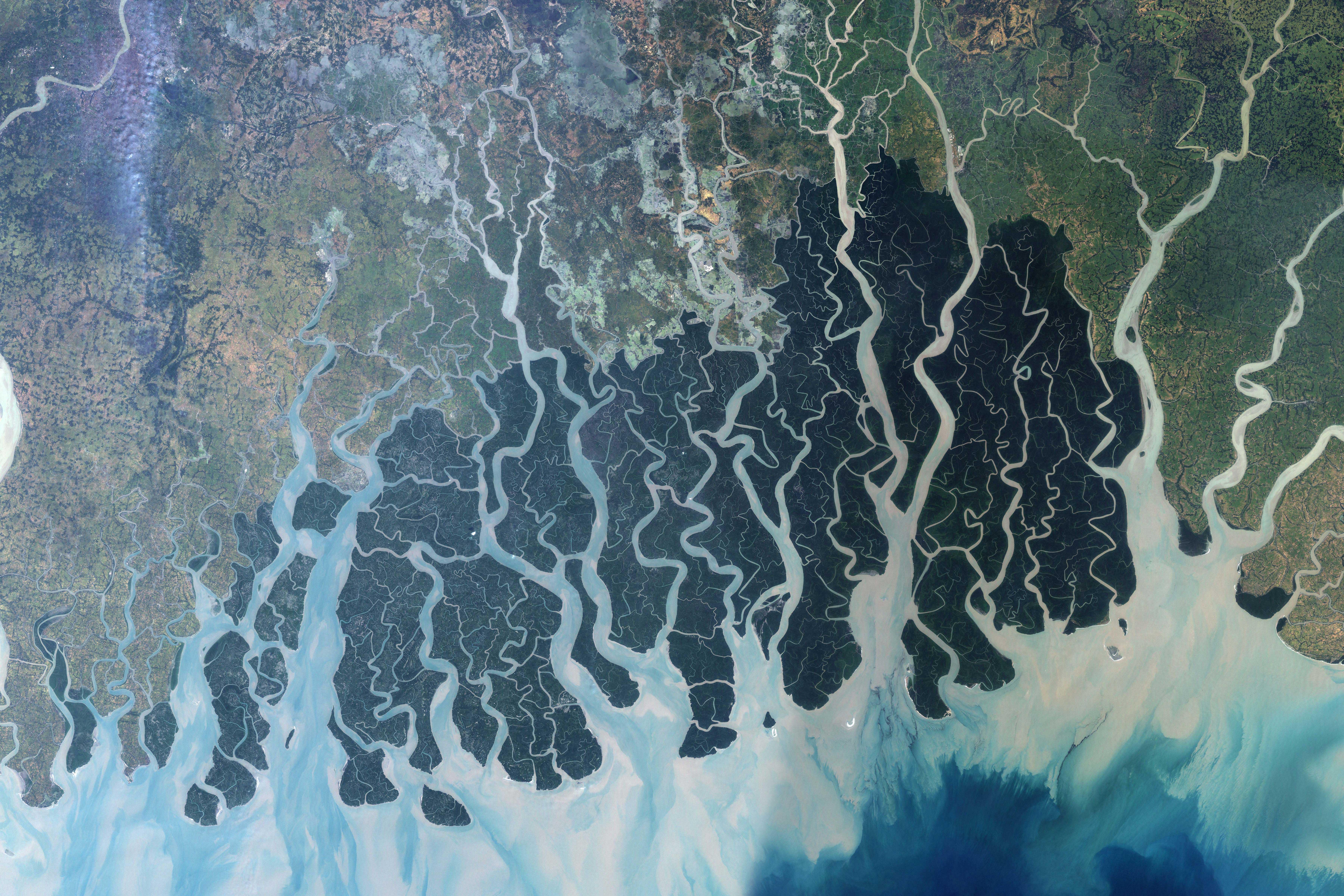 Image satellite des Sundarbans, Jesse Allen pour la NASA (2008).